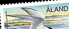 Sea Birds: Arctic tern