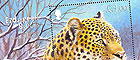 Endangered Species - Amur Leopard