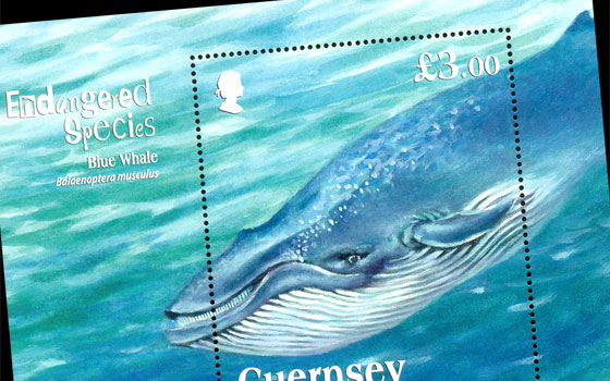 Endangered Species - Blue Whale | Official Guernsey 2011 Stamps ...