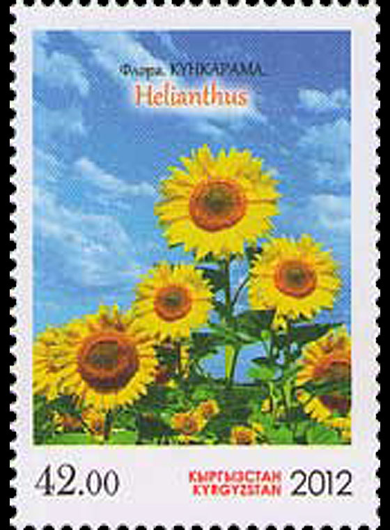 Flora - Helianthus Set