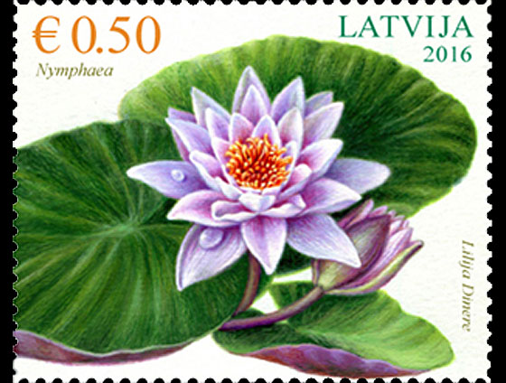 Flowers - Water lily Set