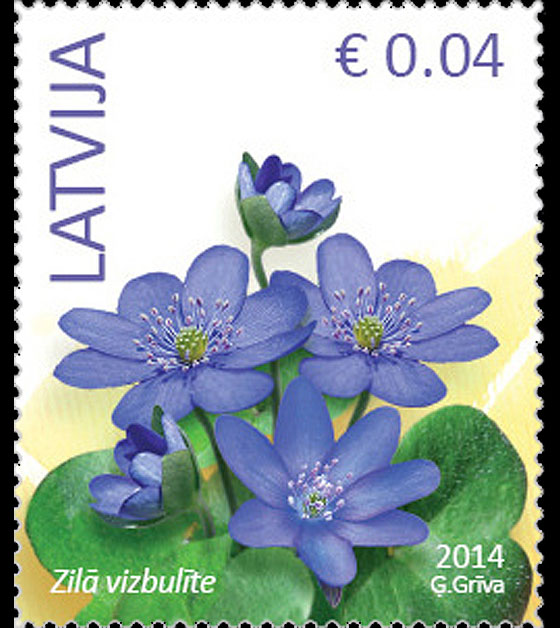 Anemone hepatica - Flowers (standard) reprinted 2016 Set