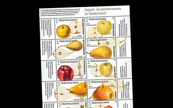 Apple and pear varieties in the Netherlands SI