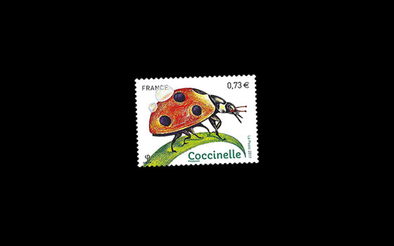 Insects - Ladybird SI