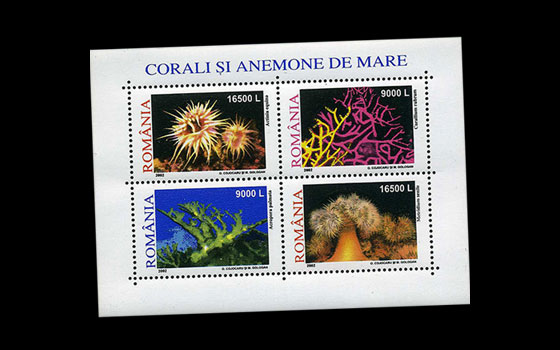 Corals and anemones 2002 SI