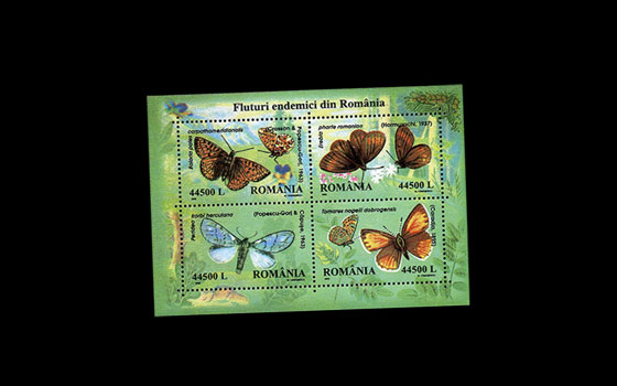 Endemic butterflies in Romania SI