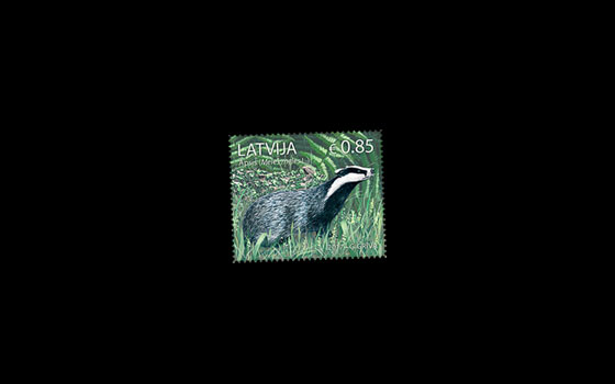 Animals of Latvia - European Badger SI