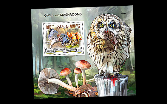 Owls and Mushrooms SI