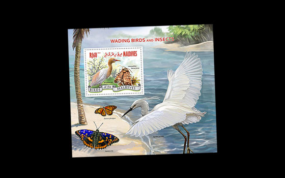 Wading Birds and Insects SI