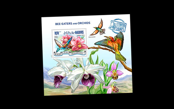Bee-eater and Orchids SI