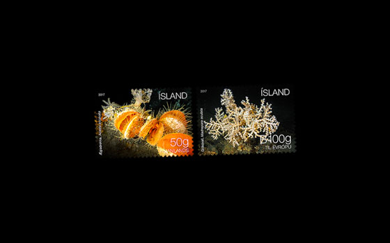 Iceland's Seabed Ecosystem II SI