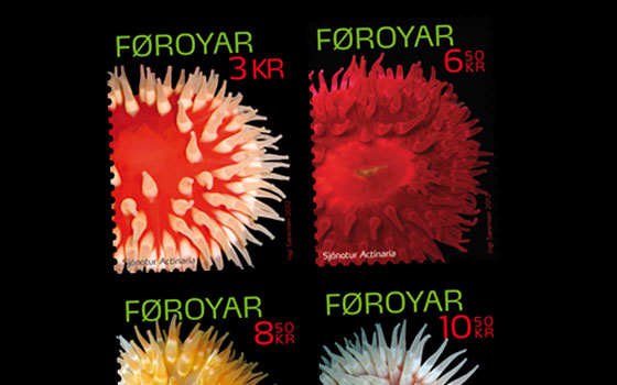 Sea Anemones - Flowers of the Sea SI