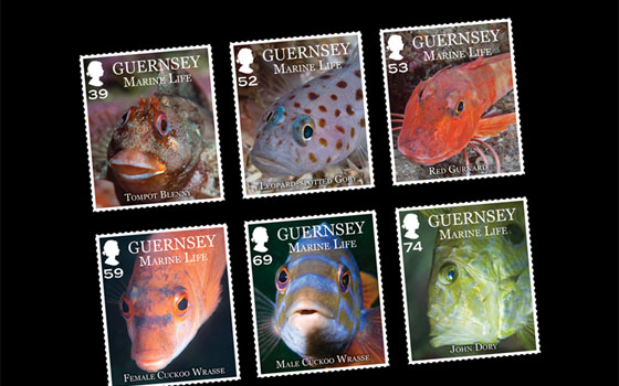 Guernsey Marine Life SI
