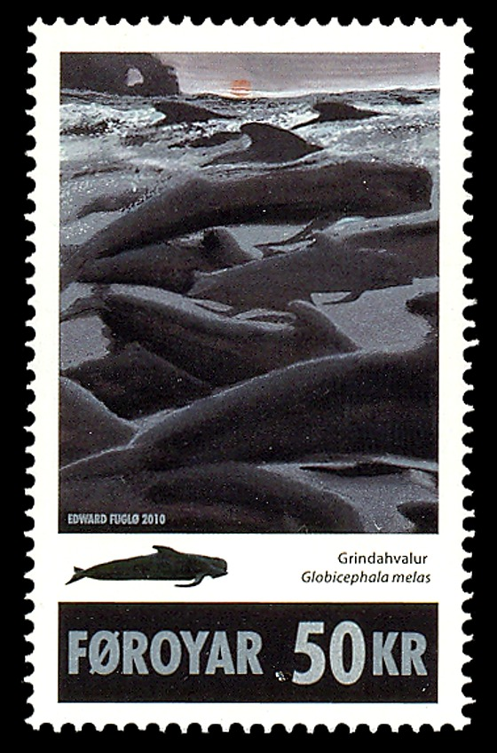 Long Finned Pilot Whale Set