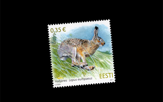Estonian Fauna - European Brown Hare SI
