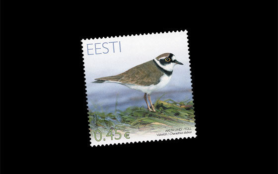 Bird Of The Year – Plover SI